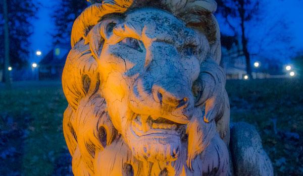 lion decorative image